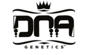 dna-genetics-cannabis-seeds-869493